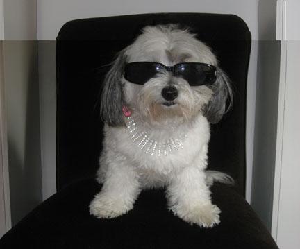sunglassesroxlrge_extbg