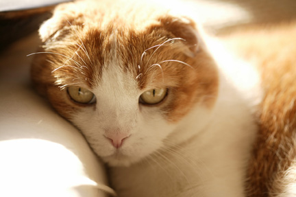 Tate_cat_sml
