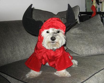 DevilRoxsml