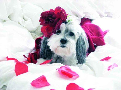ValentineGirlBrighterext